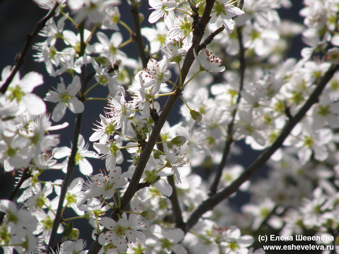 Весна в Лацио